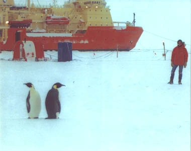 [Image of R/V N.B. Palmer and penguins during ANXFLUX]